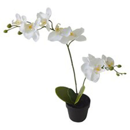 Picture of Artificial White Orchid
